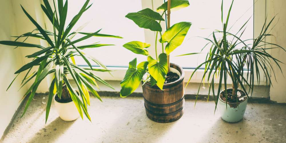 Which indoor plant fits your office space?