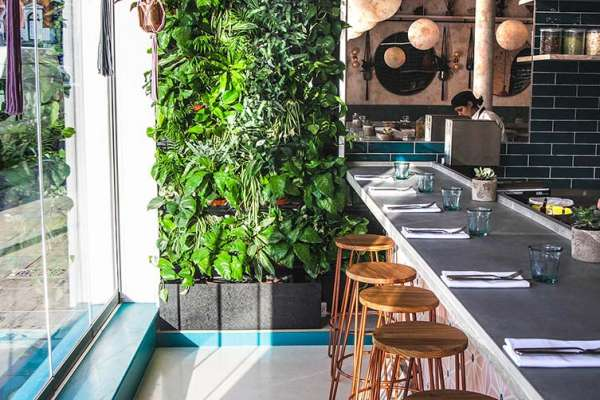 Cafe with wood stools and live green wall