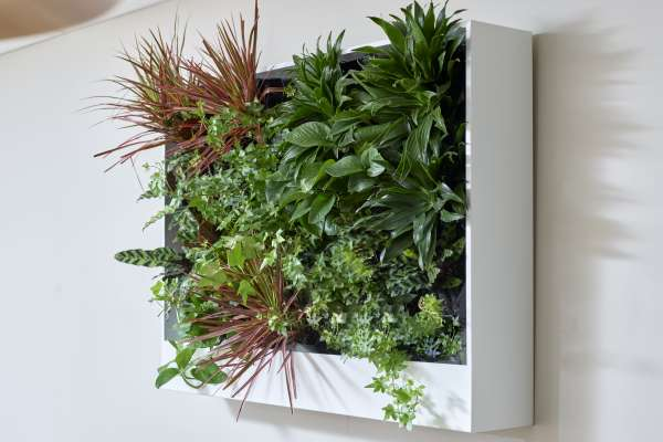 OFS and GrowUp Greenwalls partner on living wall planter