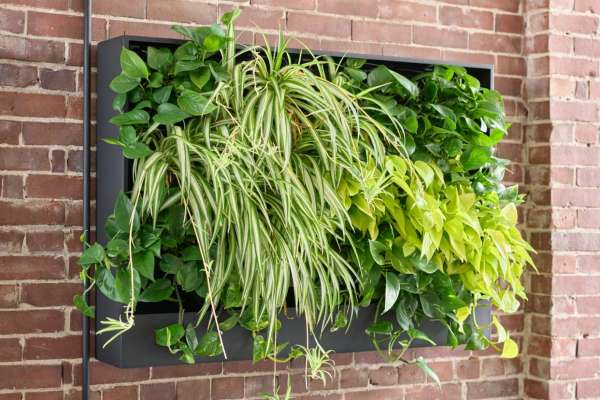 OFS Partners with GrowUp Greenwalls