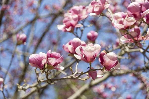 Flowers blooming in springtime
